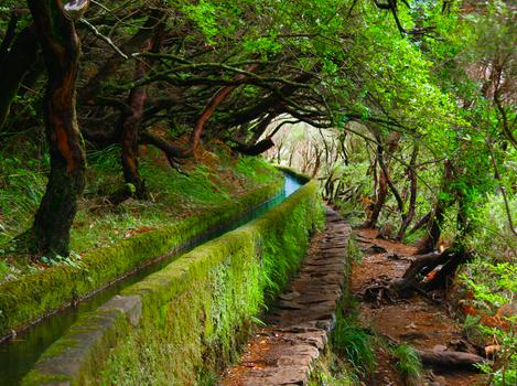 Voos Grátis para a Madeira para os Turistas Brasileiros